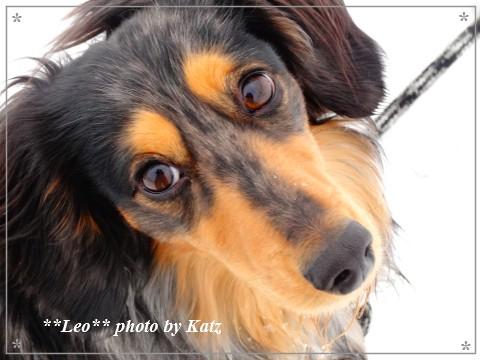 20130317 Leo (5)