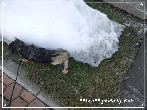20130331 Leo (2)