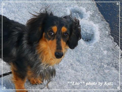 20130331 Leo (8)