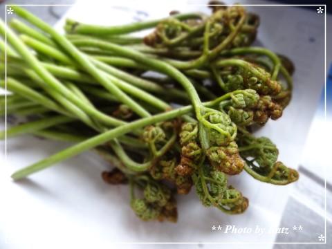 20130525 山菜 (3)