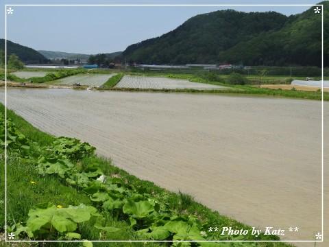 20130602 風景 (1)
