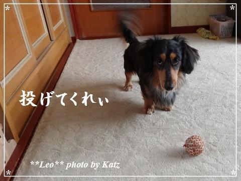 20130323 Leo (3)