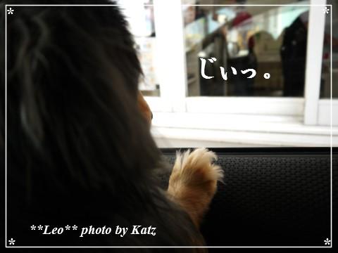 20130420 Leo (2)