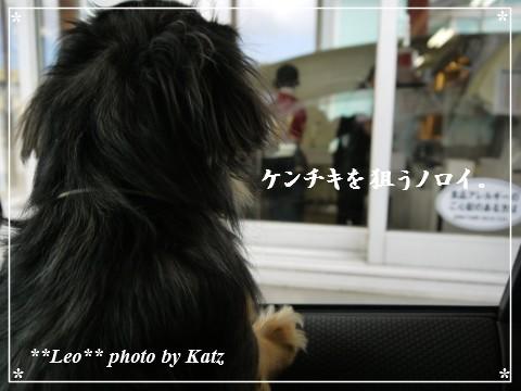 20130420 Leo (3)