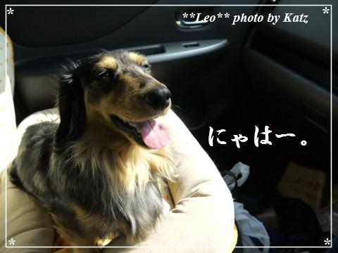 20130420 Leo (8)