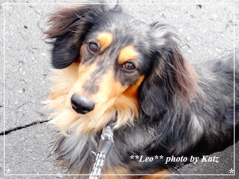 20130505 Leo (4)