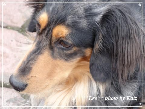 20130505 Leo (7)