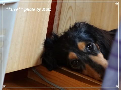 20130616 Leo (1)