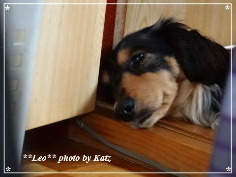 20130616 Leo (3)