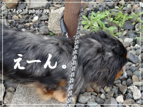 20130616 Leo (17)