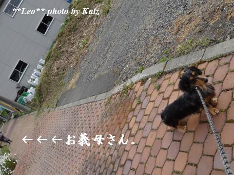 20130616 Leo (20)