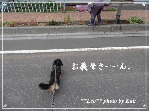 20130616 Leo (21)