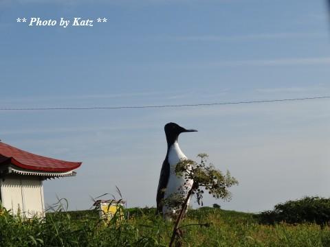 オロロン鳥 (1)