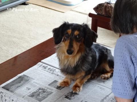 Leoと新聞 (1)