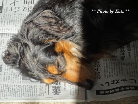 Leoと新聞 (2)