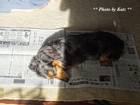 Leoと新聞 (3)