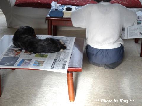 Leoと新聞 (4)