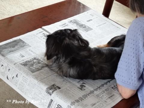 Leoと新聞 (7)