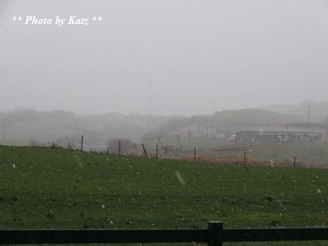 20131108初雪 (3)