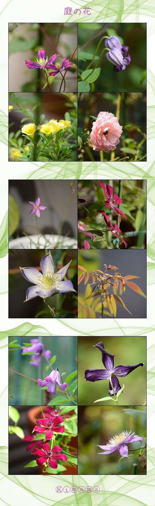 8月17日庭の花