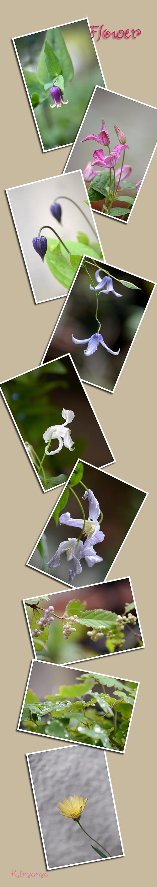 9月11日庭の花