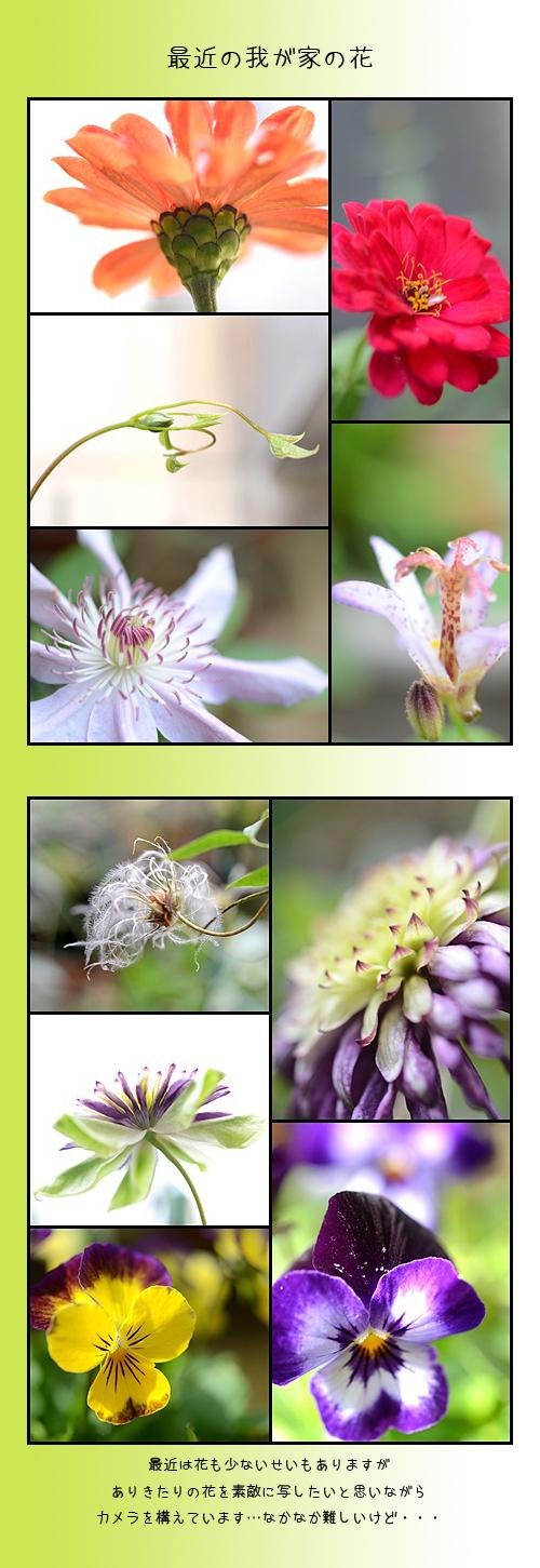 11月6日庭の花