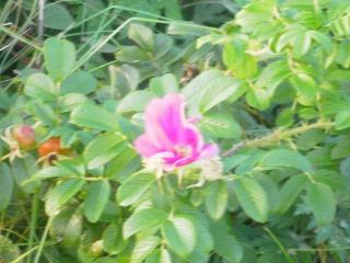 PA060535-s.jpg