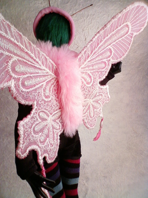 butterfly_wing2_d.jpg