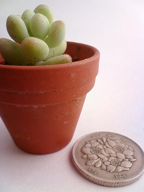 plant_pot2_c.jpg