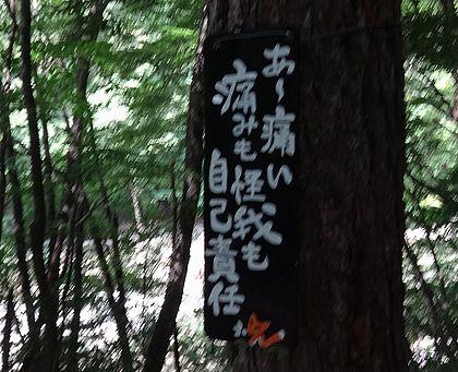 nisizawa201307b.jpg