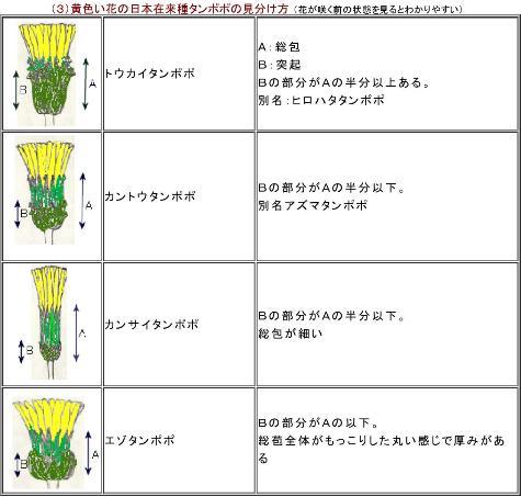 日本のタンポポの種類分け0001