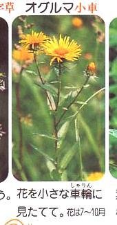 野の草名前ノート0001-2