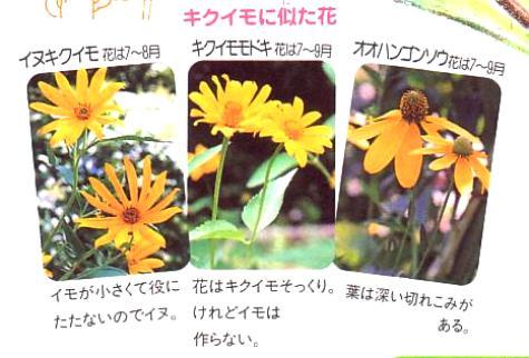 野の草名前ノート0003-2