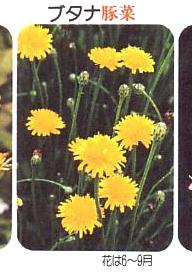 野の草名前ノート0004-2