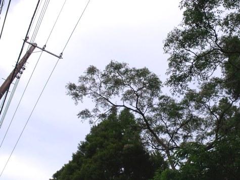 画像ー133 081-2