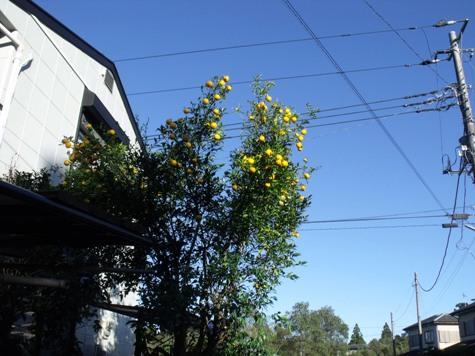 画像ー188 003-2