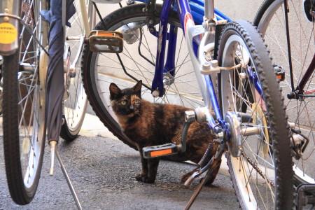 自転車サビ