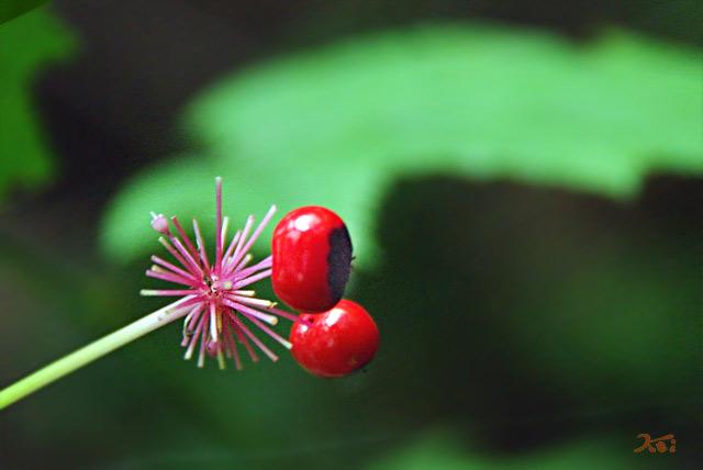 20130826日光植物園12