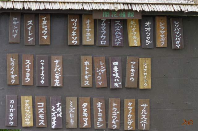 20130923彼岸花_花之江の郷02