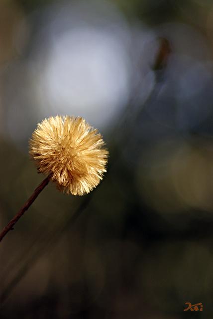 20131013赤城自然園07