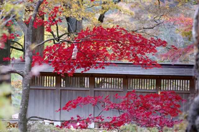 20131109榛名神社09