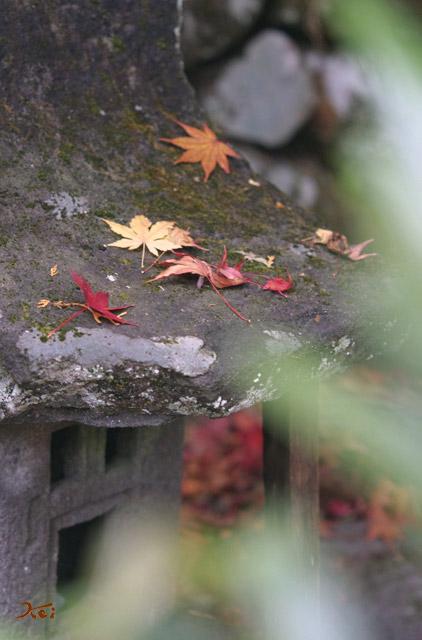 20131109榛名神社03
