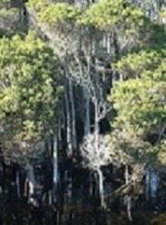 tea-tree-forest.jpeg