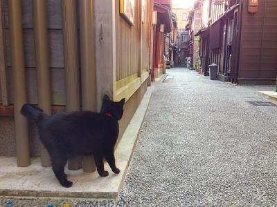 higashiyama_cat.jpg