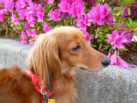 何て花なの?