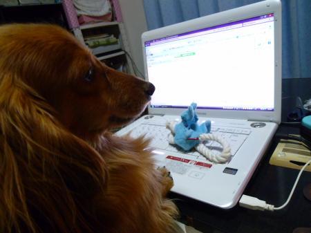 ブログ作成中!