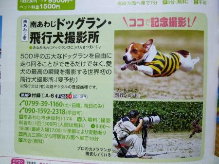 飛行犬撮影
