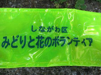 みどりと花514 (16)_R