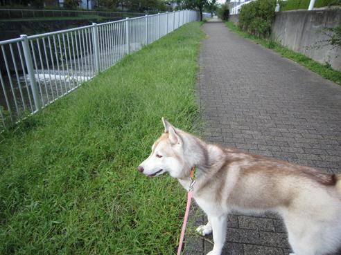 141007 散歩05