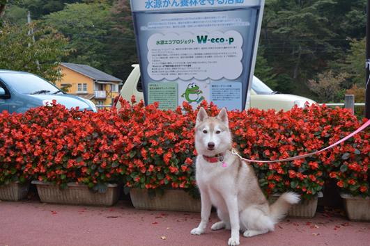 141012 山中湖11